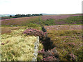 SE1601 : Along the wall towards Short Grain Head by John Slater