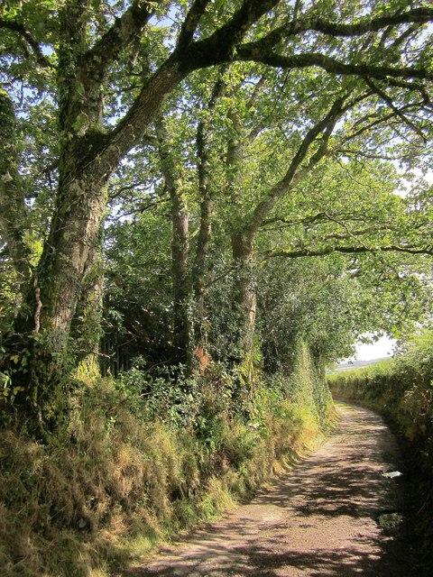 Lane to Batworthy