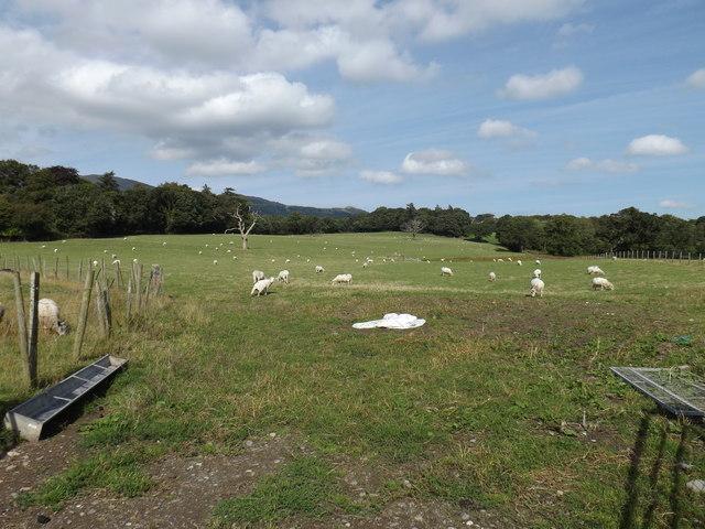 Field at Caerhun