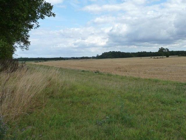 Uncultivated field margin near Downs Farm
