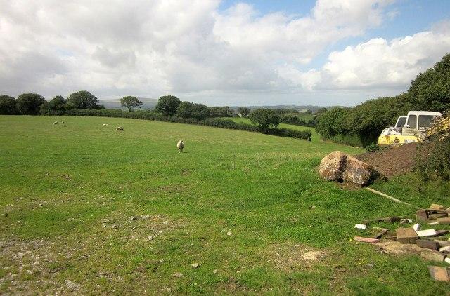 Sheep pasture near Meacombe