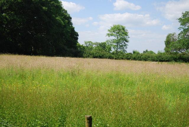 Grassy meadow