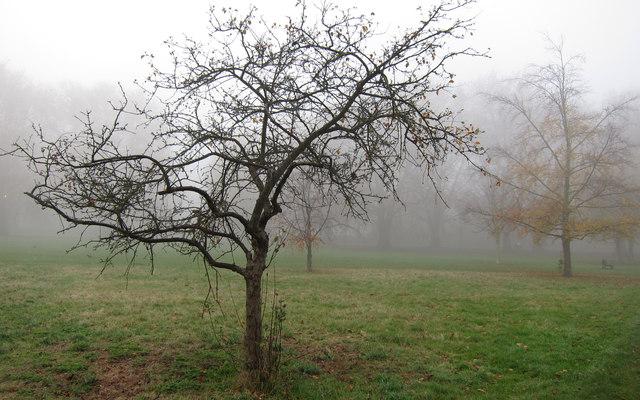 Jesus Green in the Mist