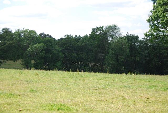 Woodland near Cowden Pound