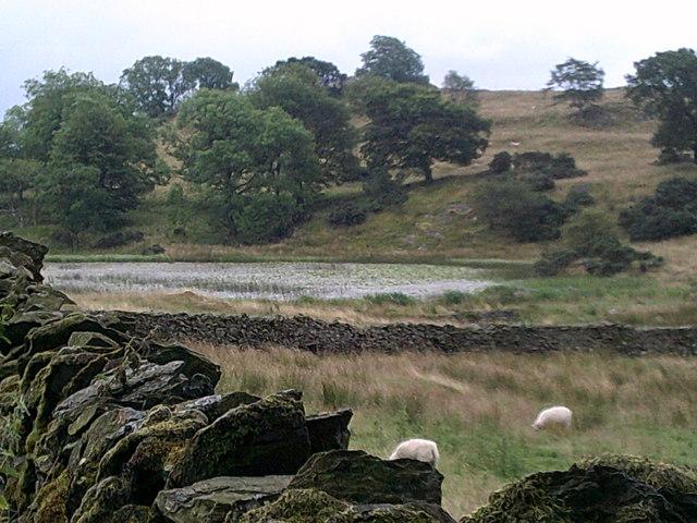 Borwick Fold Tarn seen beyond a dry stone wall
