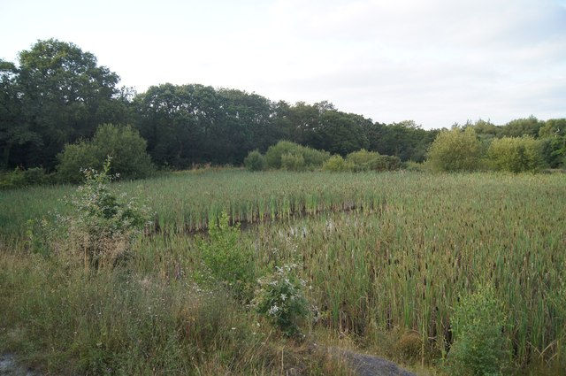 Bulrushes -  Woolladen Stone Quarry