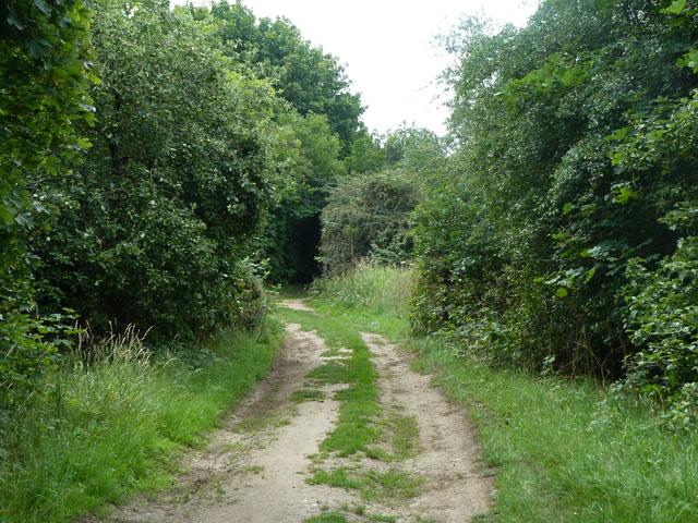 Track, Mitcham Common