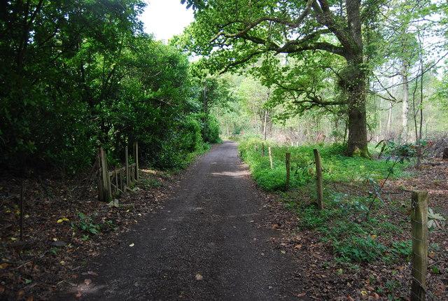 Bridleway, Westside Wood