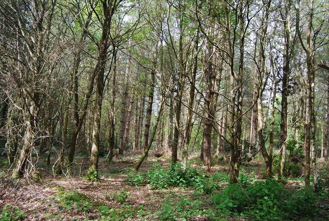 Westside Wood
