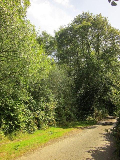 Lane past Parford Wood