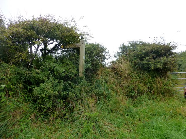 Overgrown Footpath Near Hardisworthy Trig Point