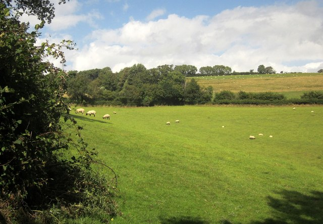 Sheep pasture near Stone Copse