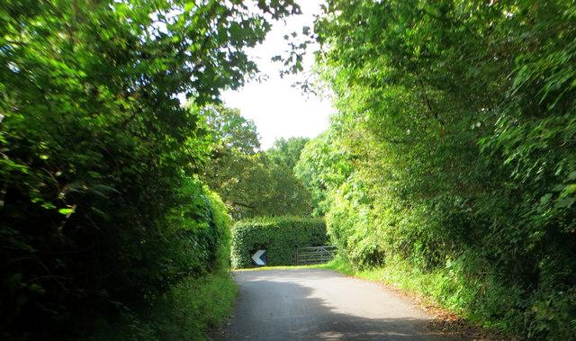 A leafy lane near Bristol.