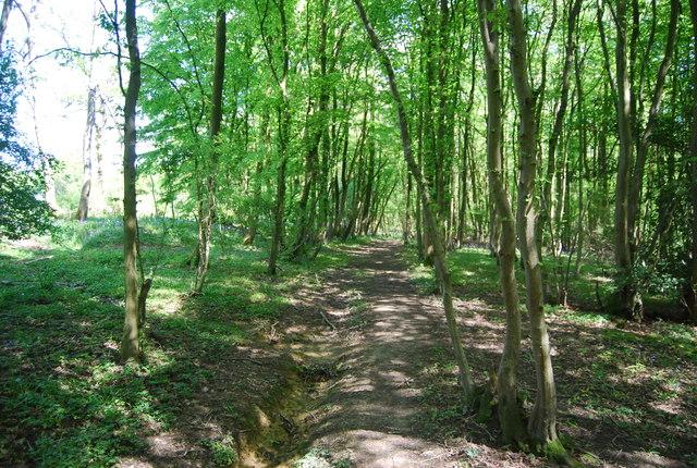 Path in Tickfold Wood