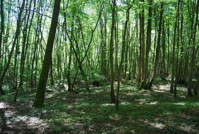 Tickfold Wood