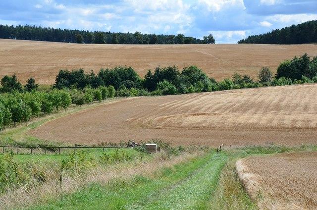 Barley fields at Brownrigg
