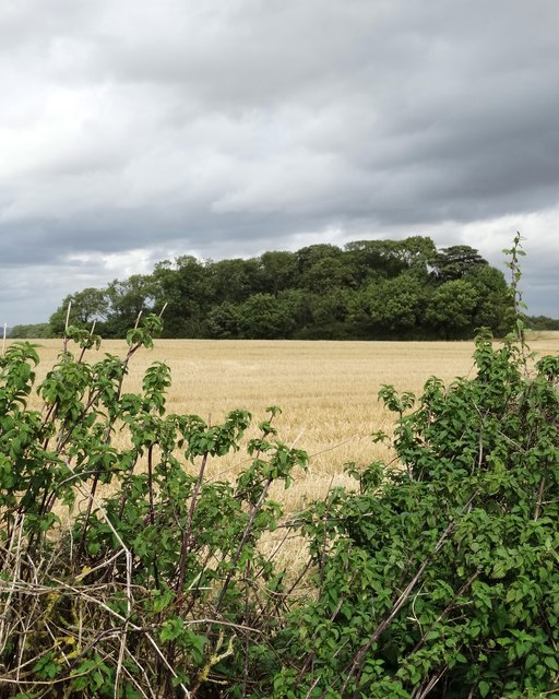 A view of Crow Wood on Loscar Common