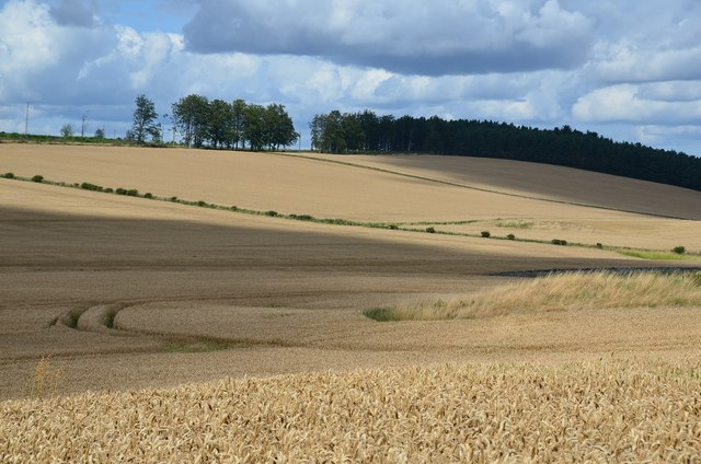 Arable fields near Wooden Hill