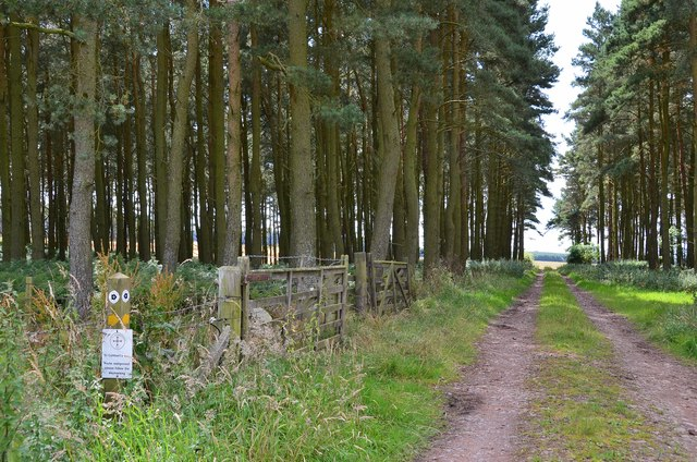 St Cuthbert's Way at Long Plantation