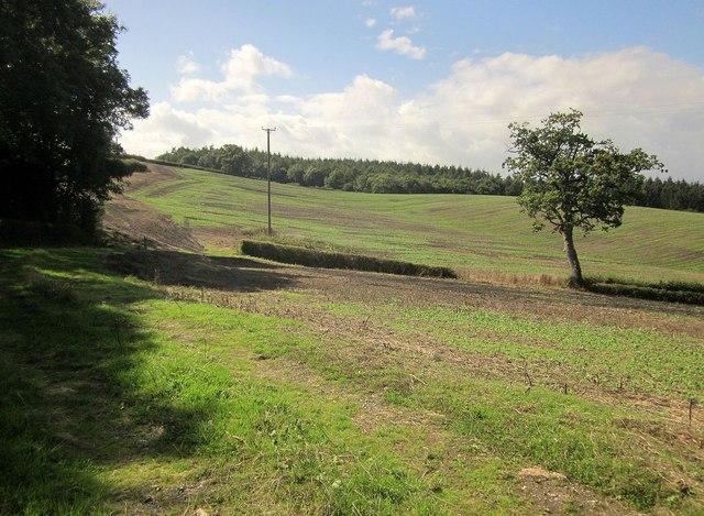 Fields near Middletown