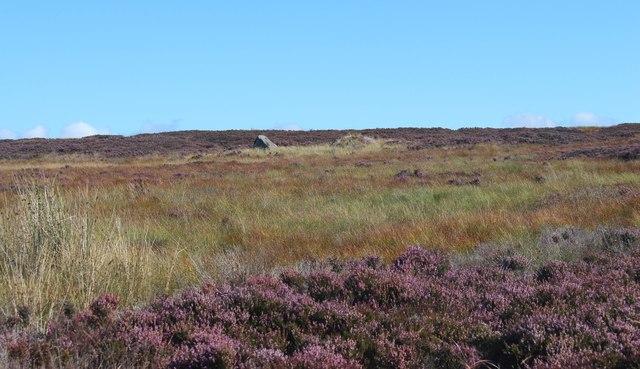 Moorland above Strath Brora