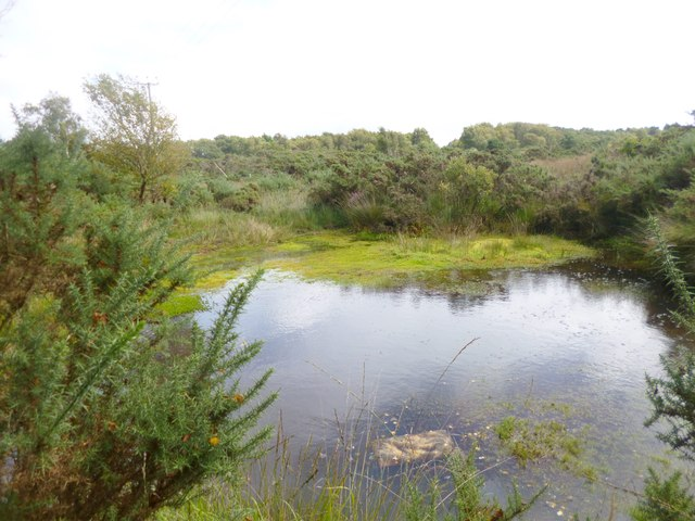 Stoborough Heath, pond