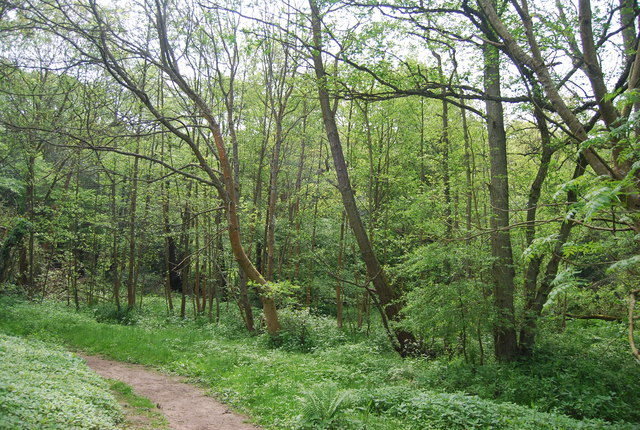 Woodland along the River Grom