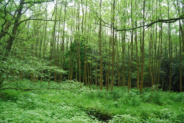 Woodland in the Grom Valley