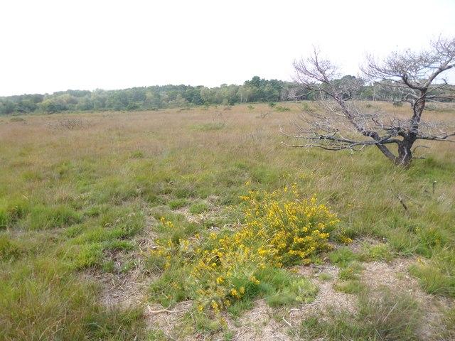 Stoborough Heath, grassland
