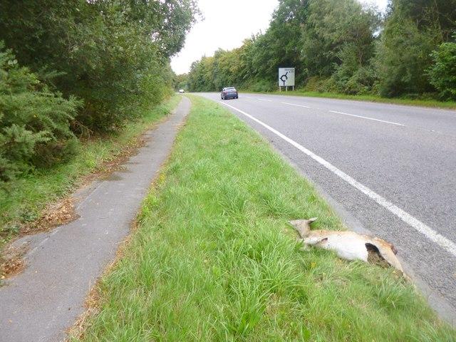 Stoborough Green, roadkill