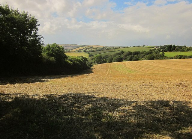 Field near Square Bookhams