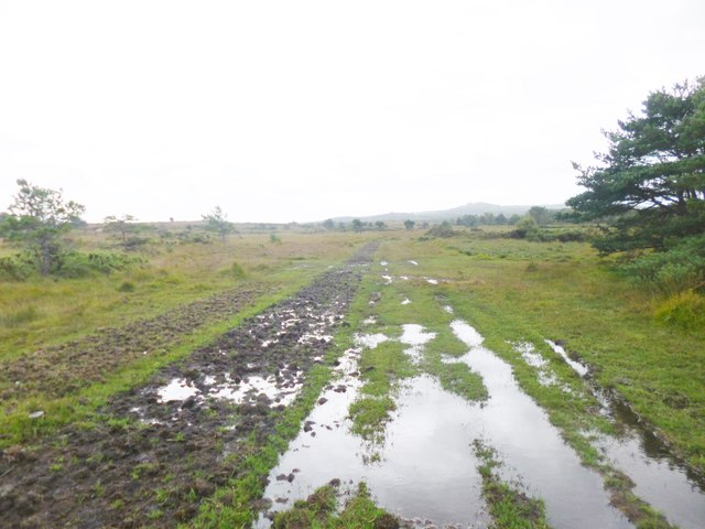 Stoborough Heath, path junction