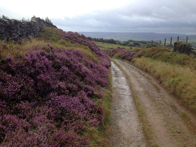 Wayside heather