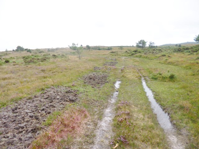 Stoborough Heath, track
