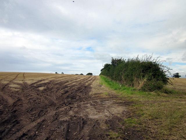 Field and Hedge near Malpas