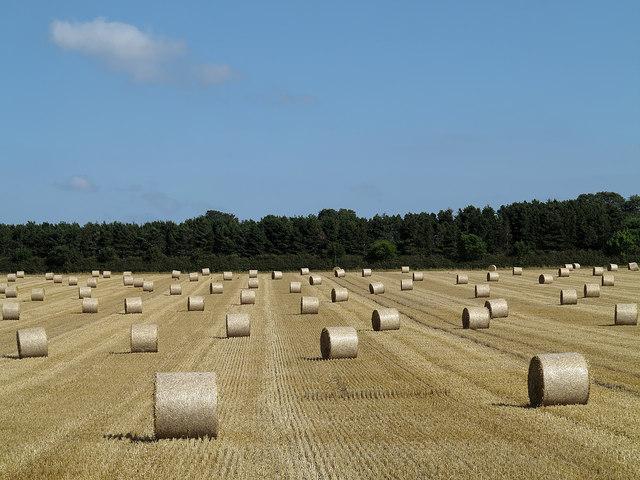 Field beside A68