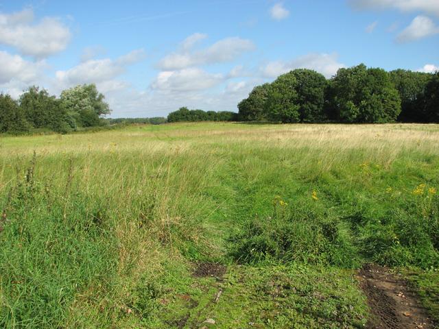 Meadow near Rackheath Hall