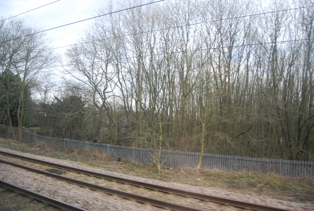 Trees by the ECML