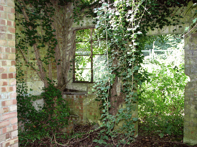 Ruined building in the woods