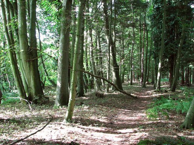 Track in Heath Wood