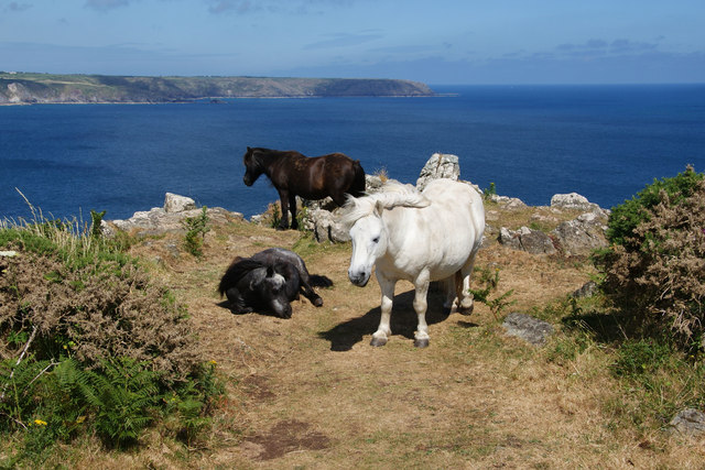 Ponies by the South West Coast Path