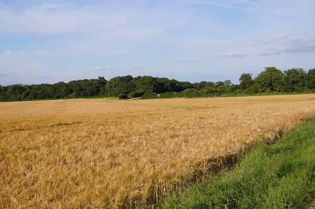 Lower Field (29.5 acres) - Breach Farm