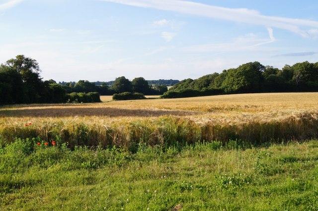 Hansfords Field (12 acres)