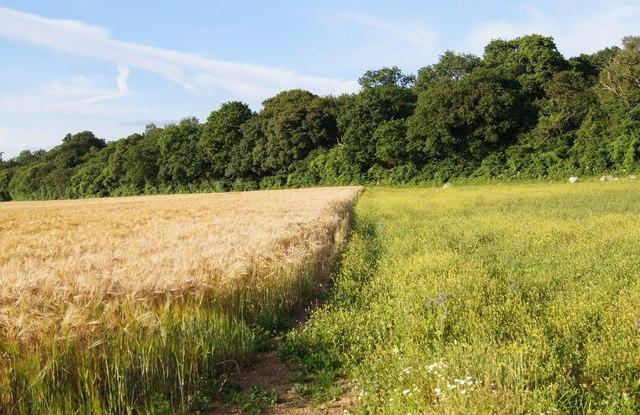 Wild corner in Lower Field (29.5 acres)