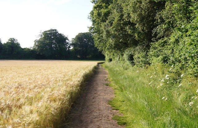 Footpath skirting Well's Copse