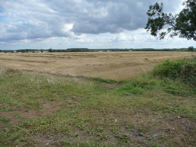 Harvested wheatfield, north-east of Leyes Farm