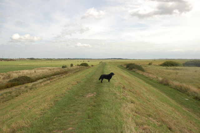 Sea wall path east of South Woodham Ferrers