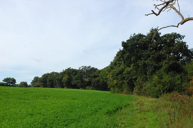Bridleway towards Bushy Hill