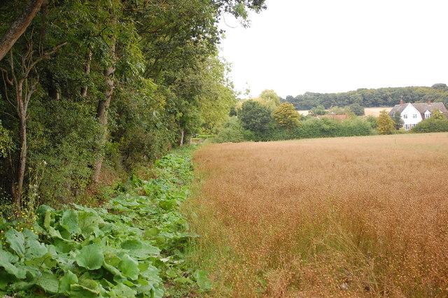 Footpath by Poorhouse Wood