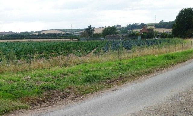Vegetable field, west of Portway Barn